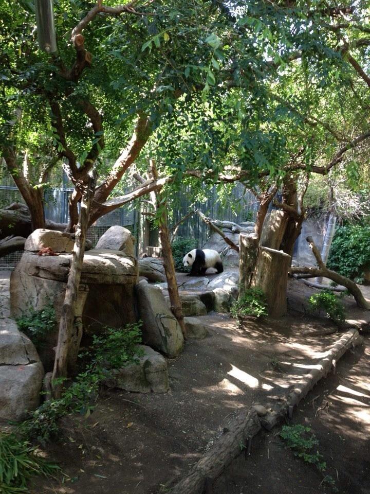 The ubiquitous panda
