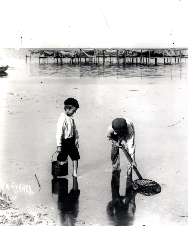 Small boys digging for clams along the east bank of the Indian River Lagoon, ca. 1890's.  Collection of the Author