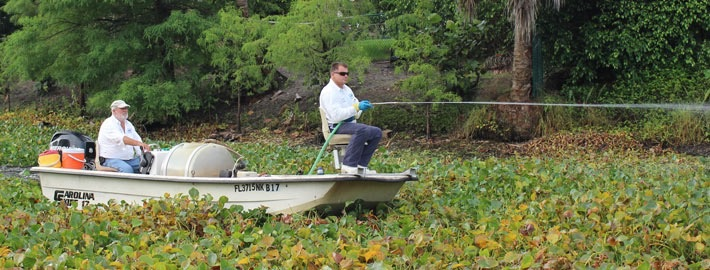 Managing invasive aquatic plants within the Lake Worth Drainage District, using environmentally safe herbicide spraying.